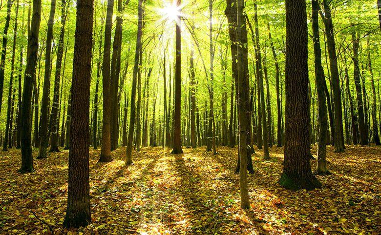 Жилой комплекс окружен лесными массивами