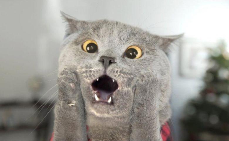 Кот и ремонт: как обезопасить питомца